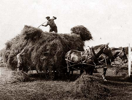 Image: Haying